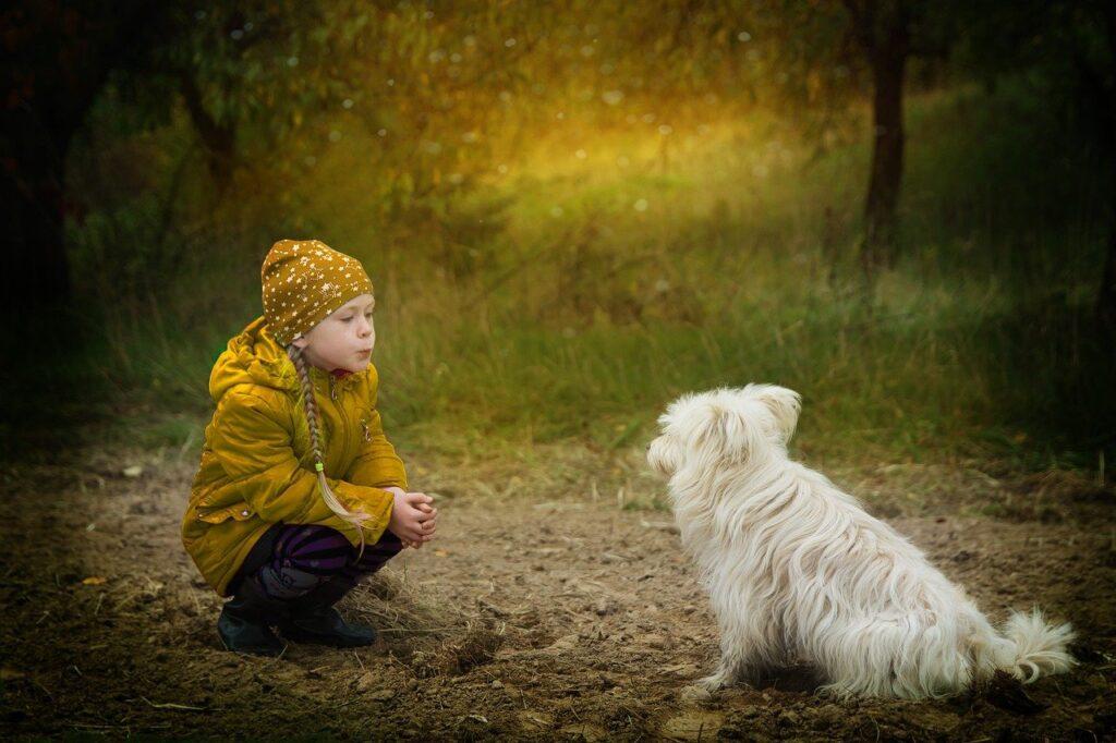 friendship, dog, however